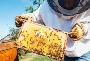 Stolarsko pčelarska radnja NEŠA Valjevo