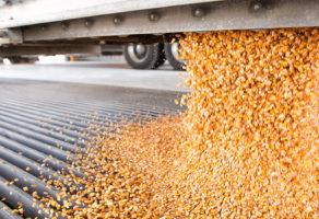 Gajenje žita (osim pirinča), leguminoza i uljarica – Bukovica D.O.O.