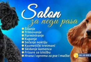 EDVARD Salon za negu i šišanje pasa by Pavle Dejanić