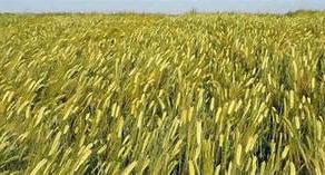 Privredno Drustvo Dulijan Agrar