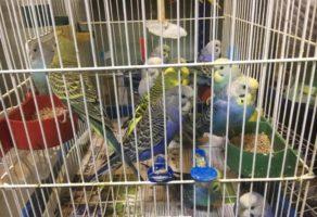Pet Shop Animal Kingdom Požega