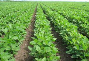 BRAZDA – Proizvodnja i prodaja poljoprivrednih proizvoda Kovačica
