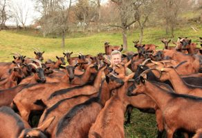 Farma koza DOSKOVIĆ Zvjezd Prijepolje